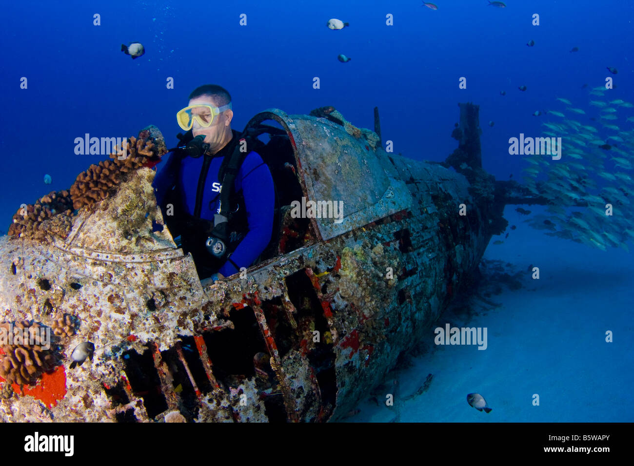 Diver in the cockpit of a WW II Corsair fighter plane off South East Oahu, Hawaii. - Stock Image