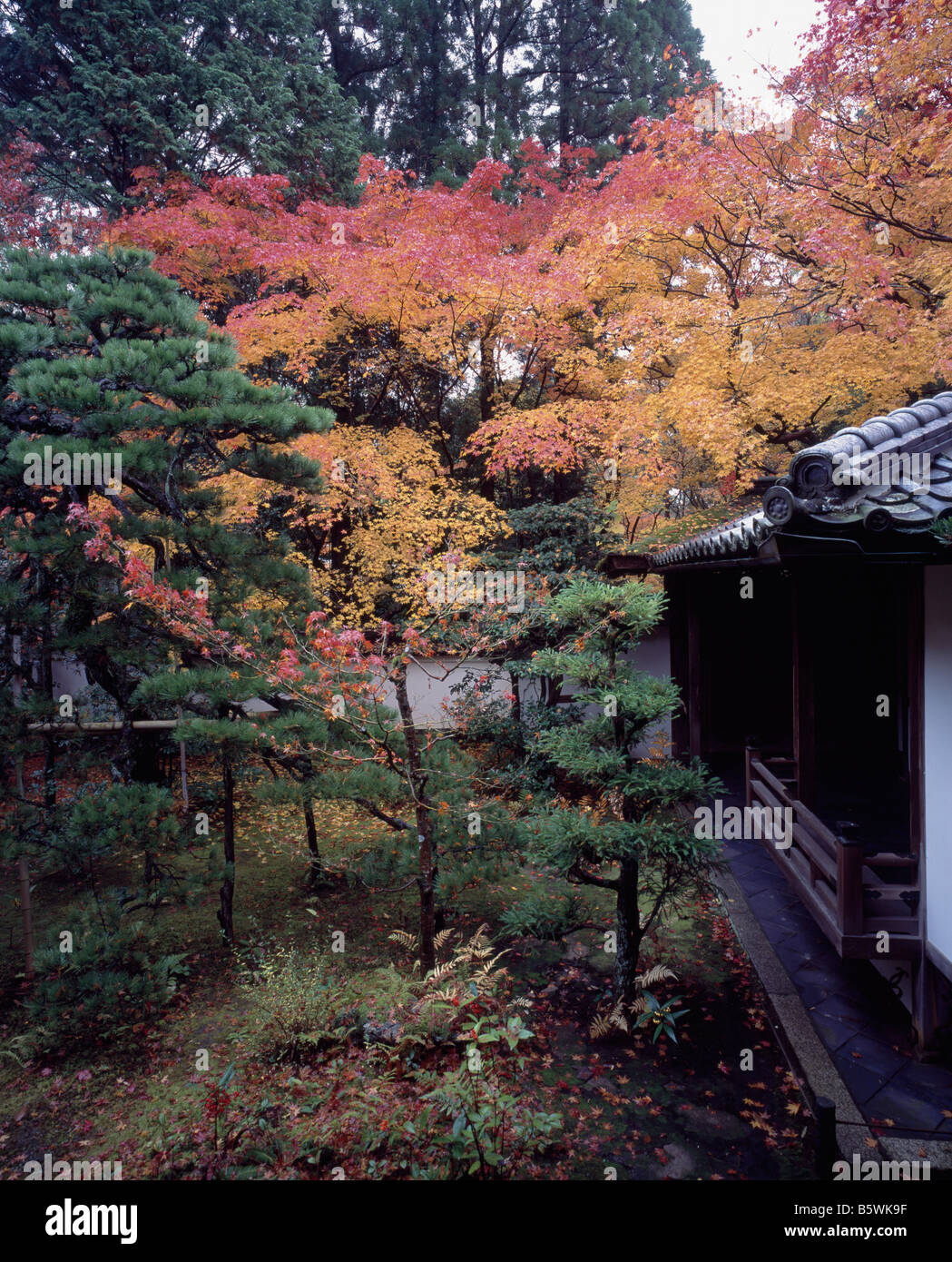 Koto-In Daitokuji Kyoto - Autumn Leaves - Stock Image