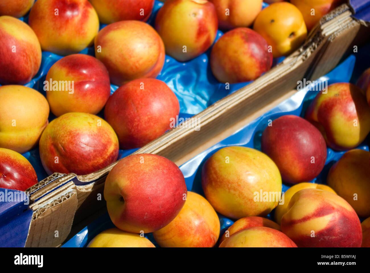 Nectarines displayed in cardboard carton - Stock Image