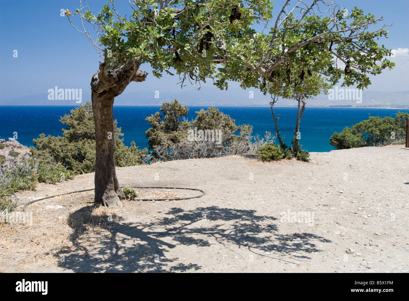 Seascape view from the hill in park near Aphrodite bath Cyprus with bend tree in front Stock Photo