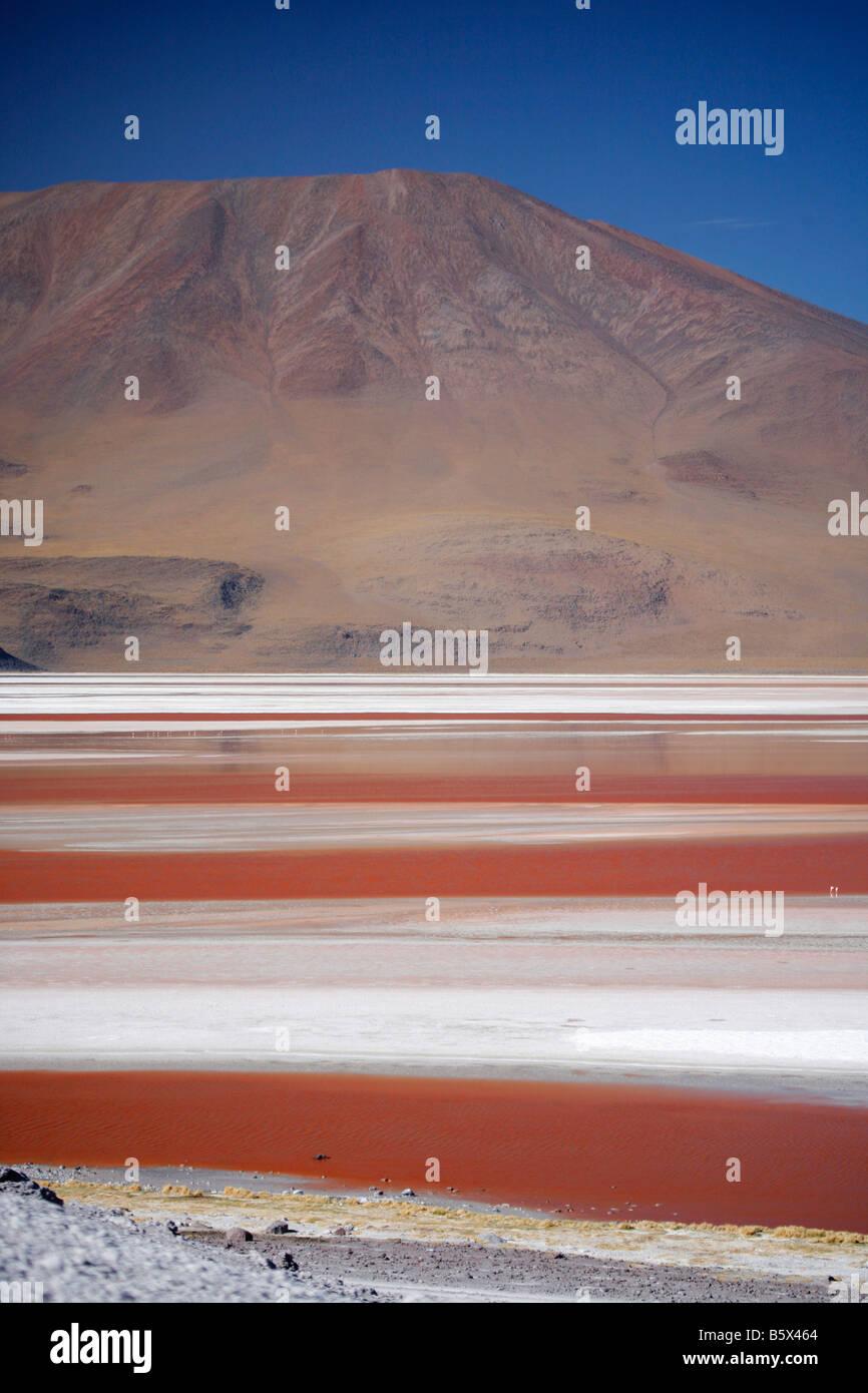 Laguna Colorada on the Bolivian altiplano - Stock Image