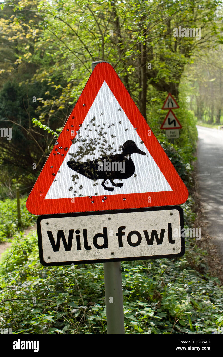 A road sign warning of wild fowl crossing peppered with bulletholes - shotgun pellets - at Blackpool Sands Devon - Stock Image