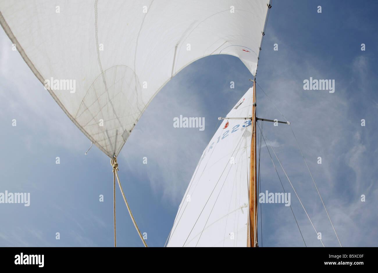 Mainsail and headsail of a sailing boat - Stock Image