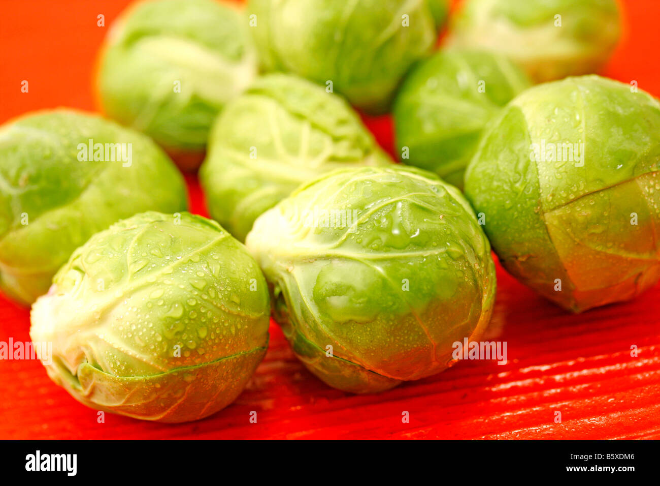 Sprout cabbage Stock Photo
