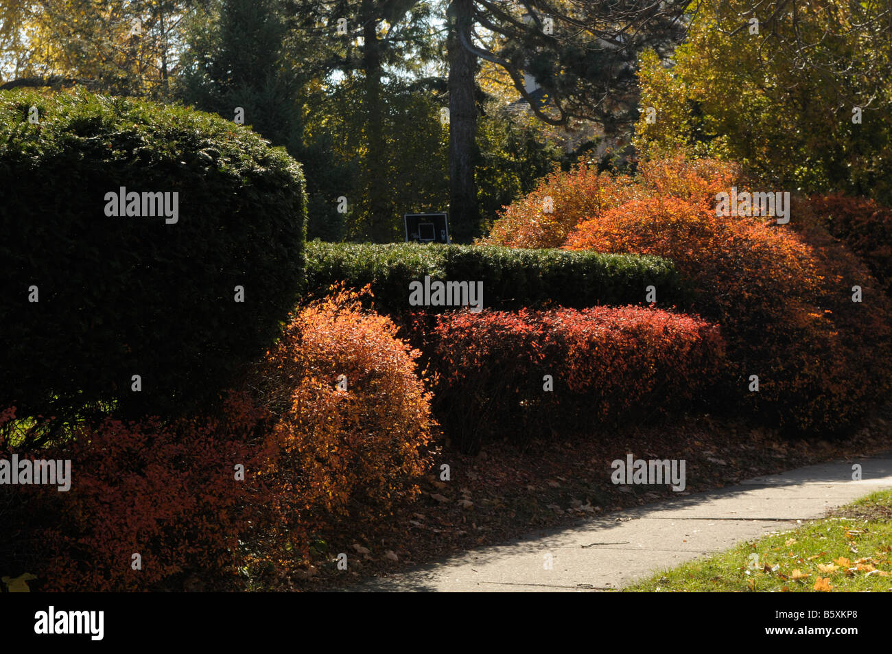 Sculpted hedge row in Rochester, NY USA. - Stock Image