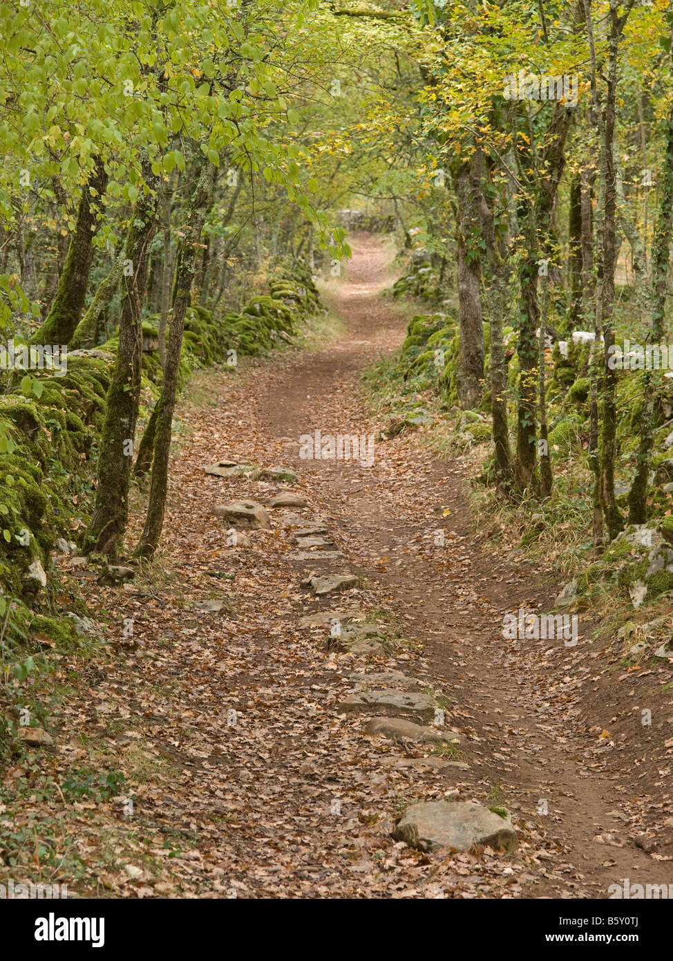 hiking path through forest with autumn leaves in Quercy Tarn et Garonne France - Stock Image