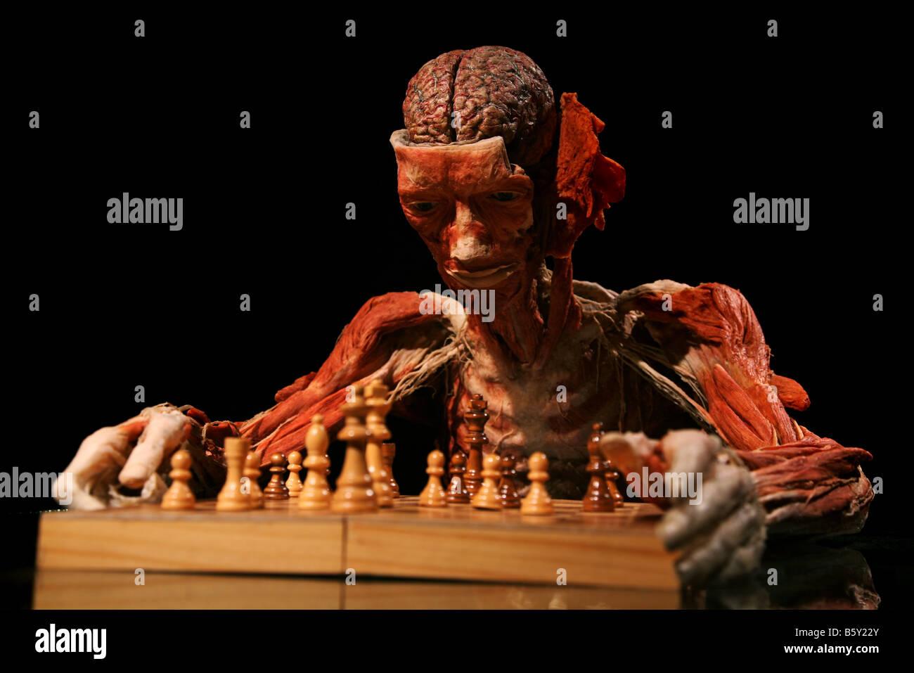 Chess brain anatomy biology Gunther von Hagen Body worlds works ...