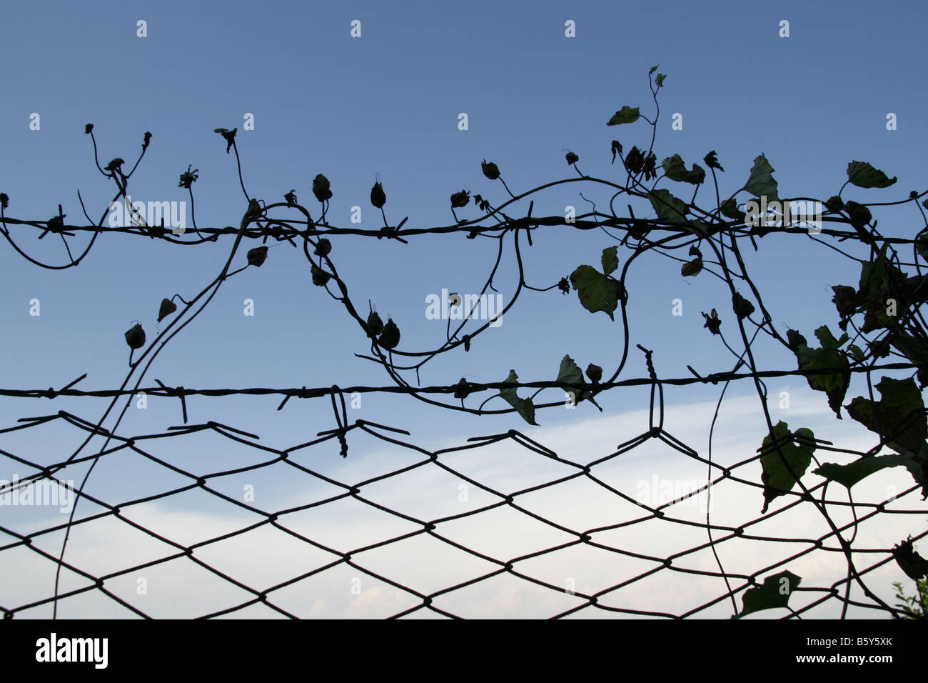 Barbed Wire Or Twine - WIRE Center •