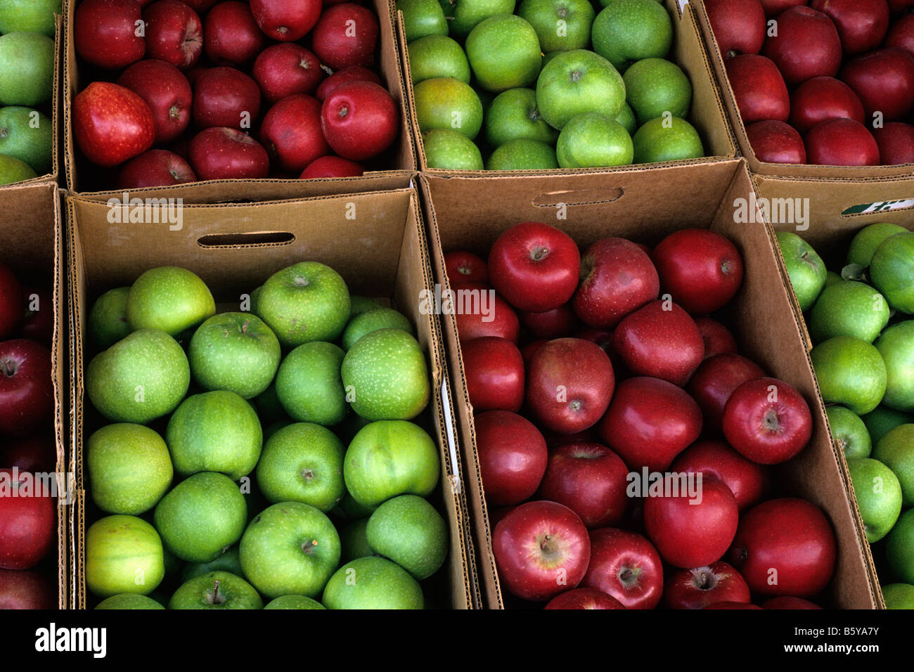 Apples being sold at farmers market Everett Washington State USA Stock Photo