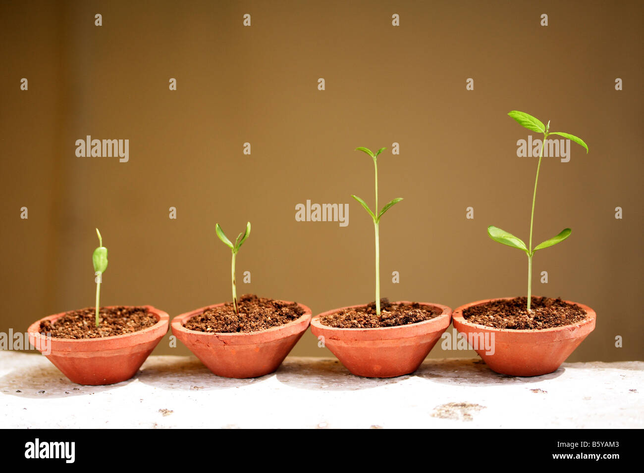Progression of seedling growth. - Stock Image