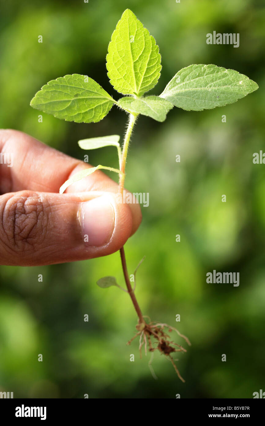 Holding a seedling-New life - Stock Image