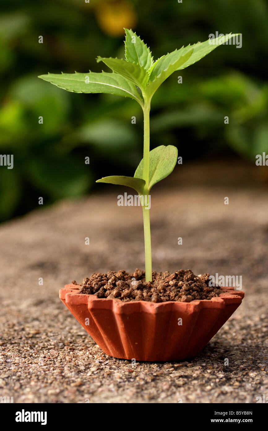 Small plant-New life - Stock Image