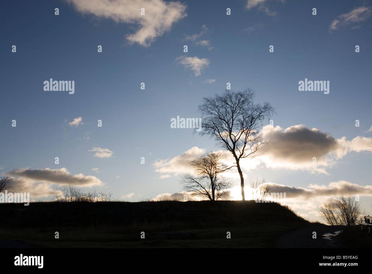 leafless trees against sunset - Stock Image