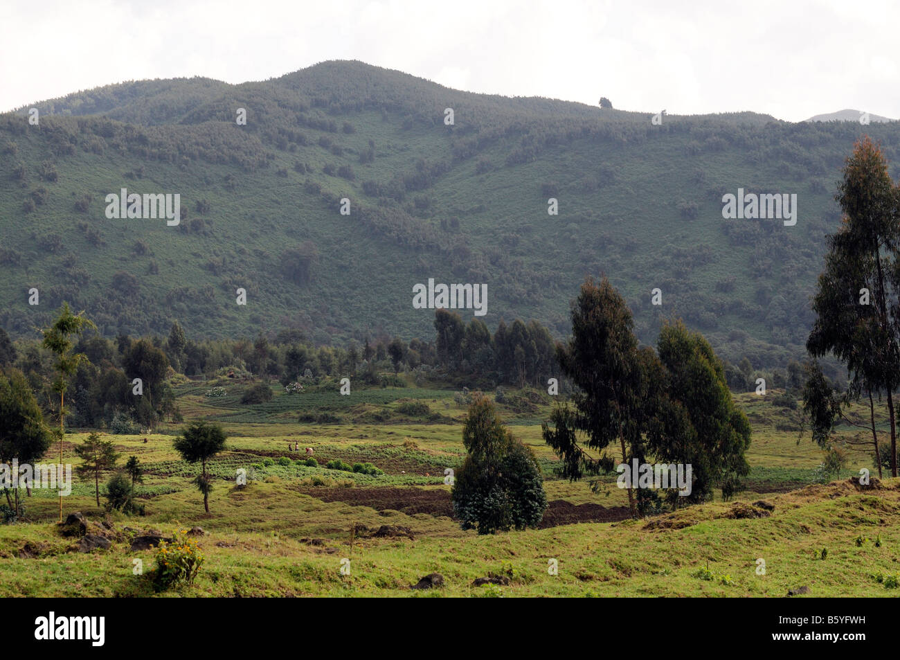 typical rural countryside farm land beside the volcanoes national park in rwanda - Stock Image