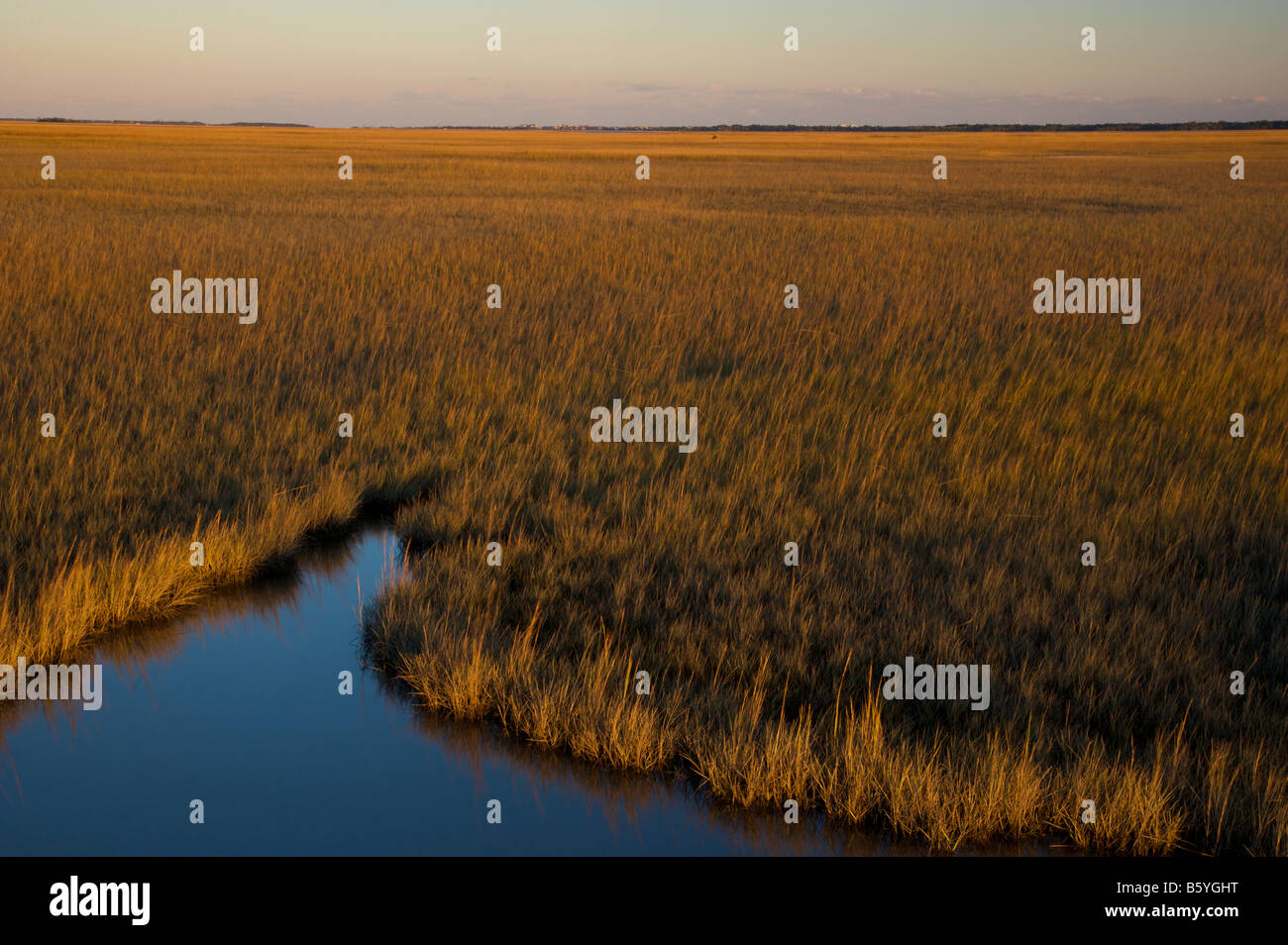 Saltwater marsh along the coast of South Carolina near Charleston - Stock Image