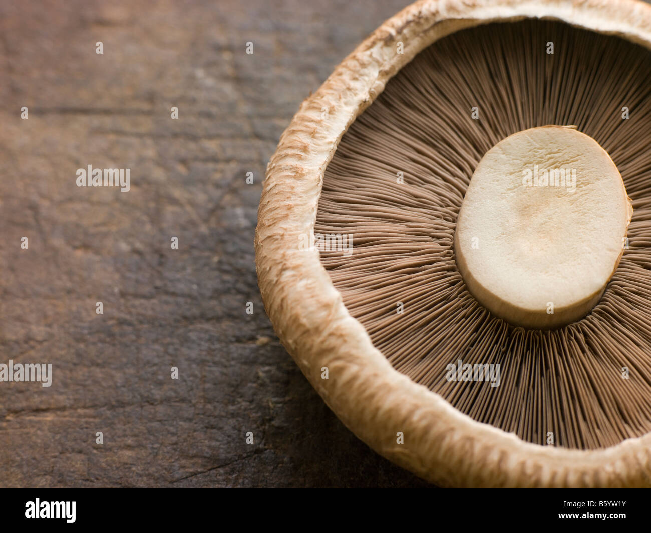 Portobello Mushroom - Stock Image