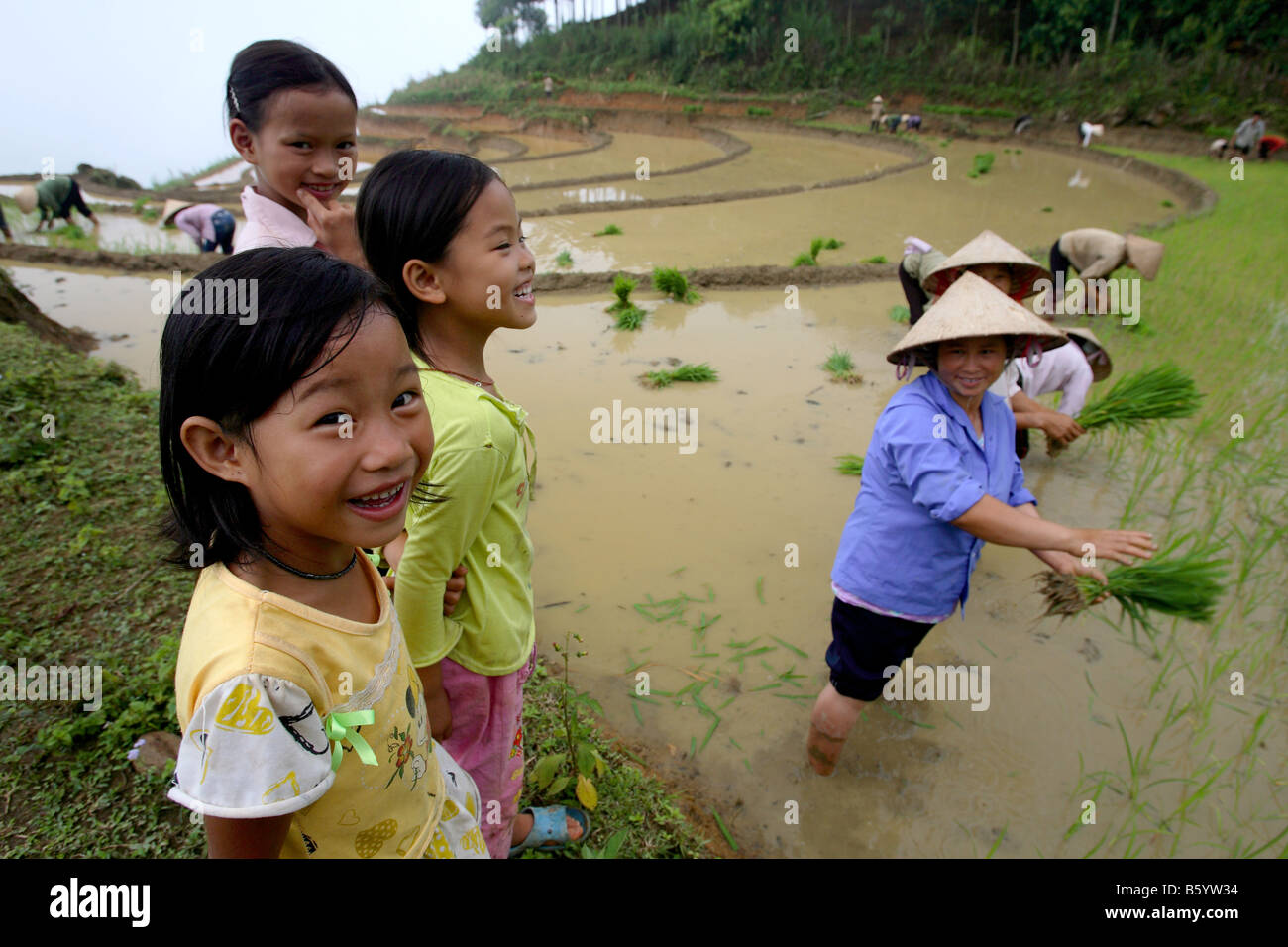 Children laughing mothers rice planting Bac Ha area North Vietnam Asia - Stock Image