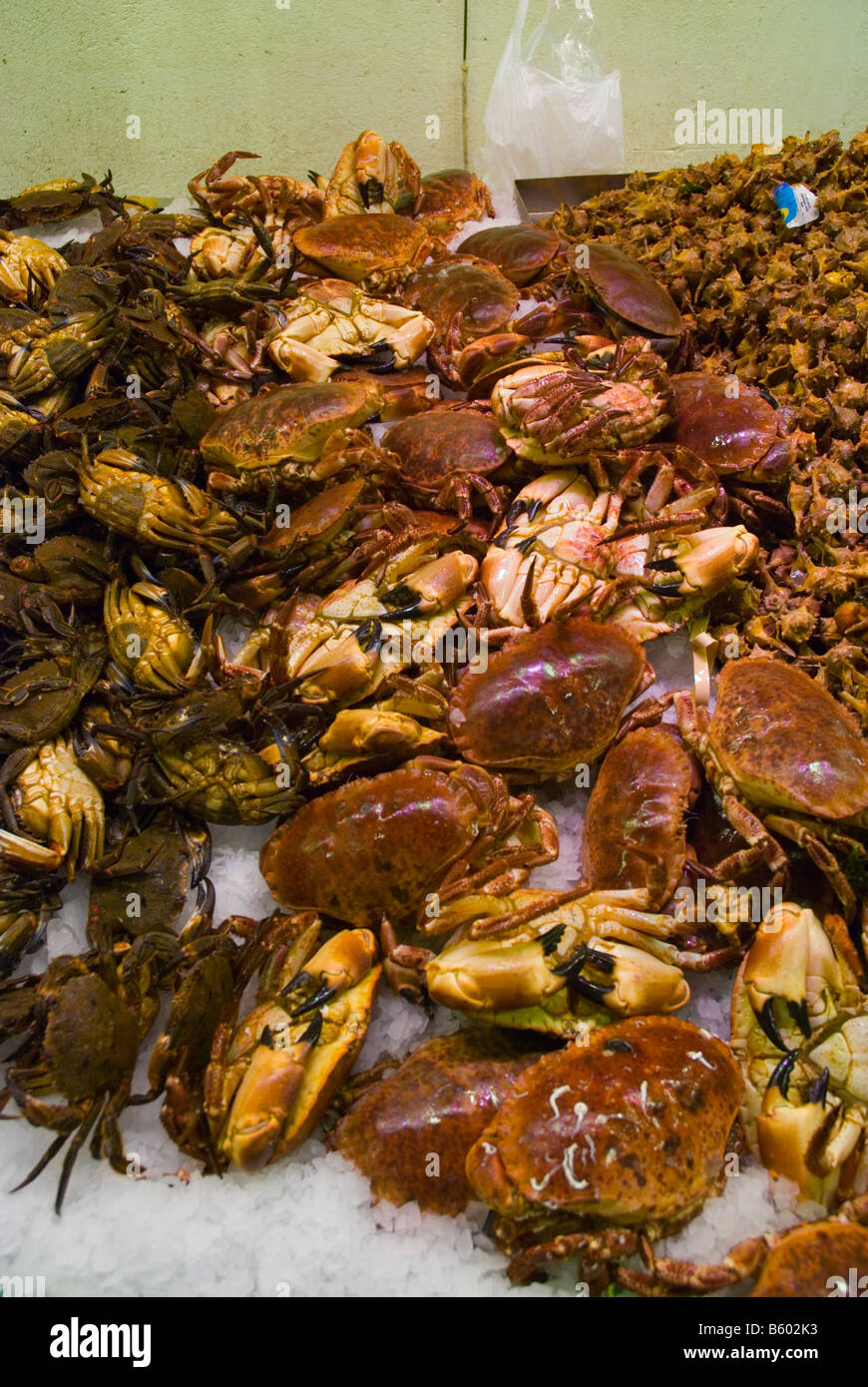 Crayfish and other seafoods at La Boqueria market in Barcelona Spain Europe - Stock Image