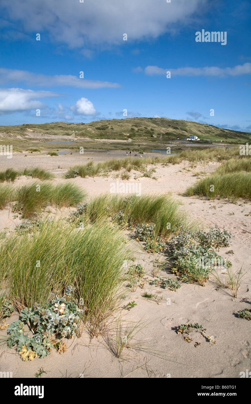 st gothian sands nature reserve gwithian cornwall - Stock Image