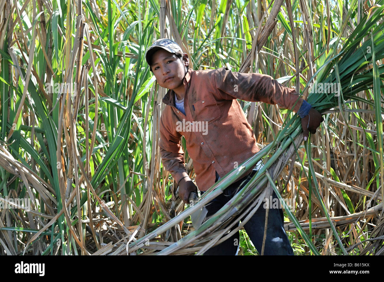 Underage migrant worker harvesting sugar cane for the production of ethanol and biodiesel, Montero, Santa Cruz, - Stock Image