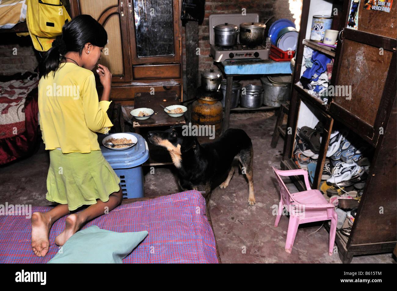Girl and dog, poor living conditions in the Slum Area Plan 3000, Santa Cruz, Bolivia, South America - Stock Image