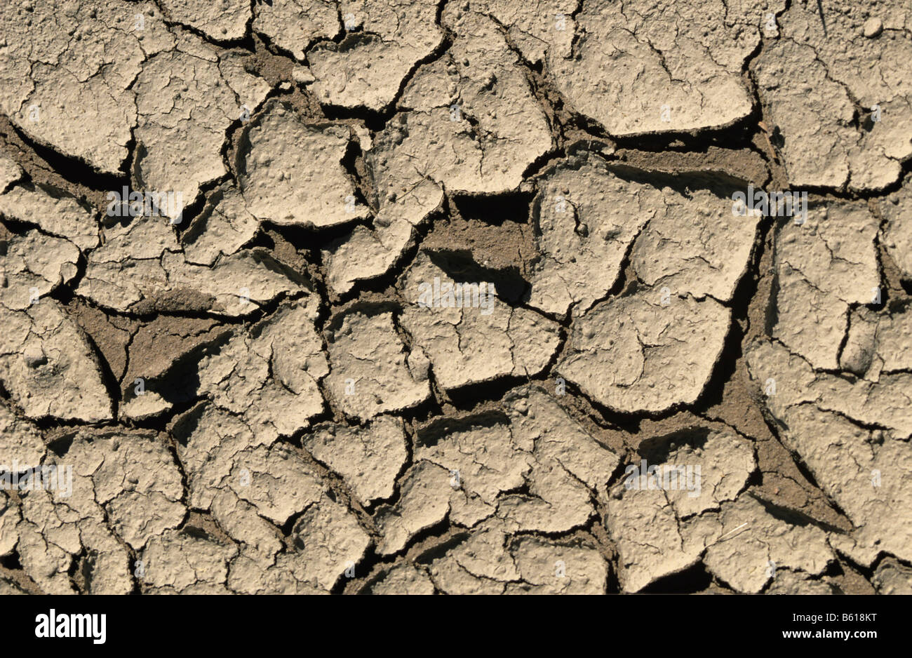 Dried out soil caused by drought and lack of water - Stock Image