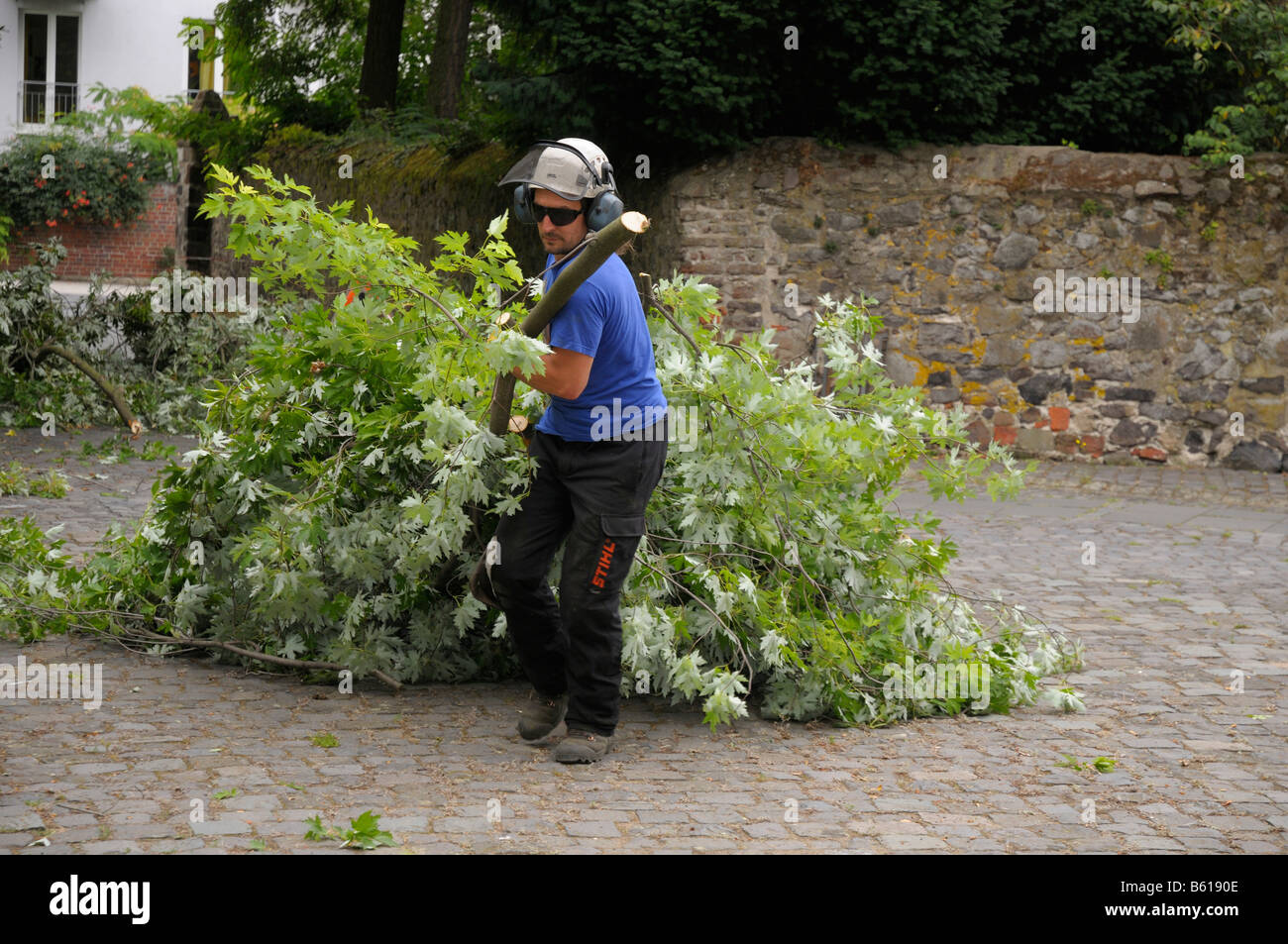 Man removing detached branches - Stock Image