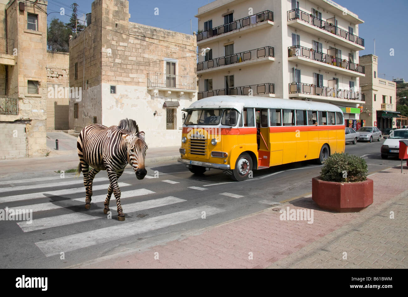 A Zebra crossing, a Zebra Crossing ! Stock Photo