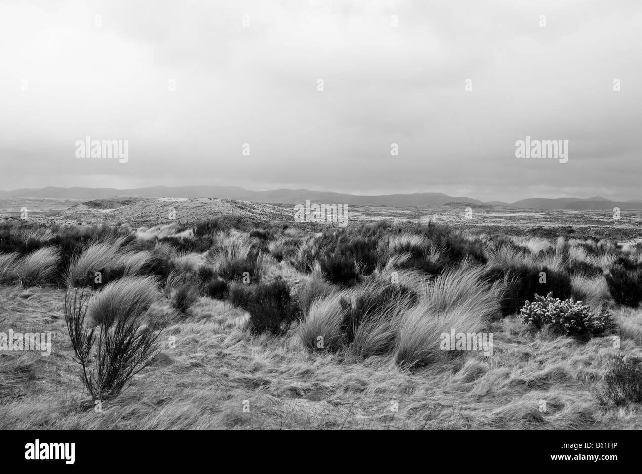 Rangipo Desert is a desert-like environment in New Zealand, located in the Ruapehu District on the North Island Stock Photo