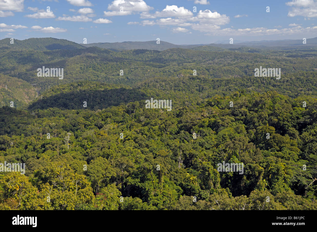 View over primary rain forest, North Queensland, Australia - Stock Image