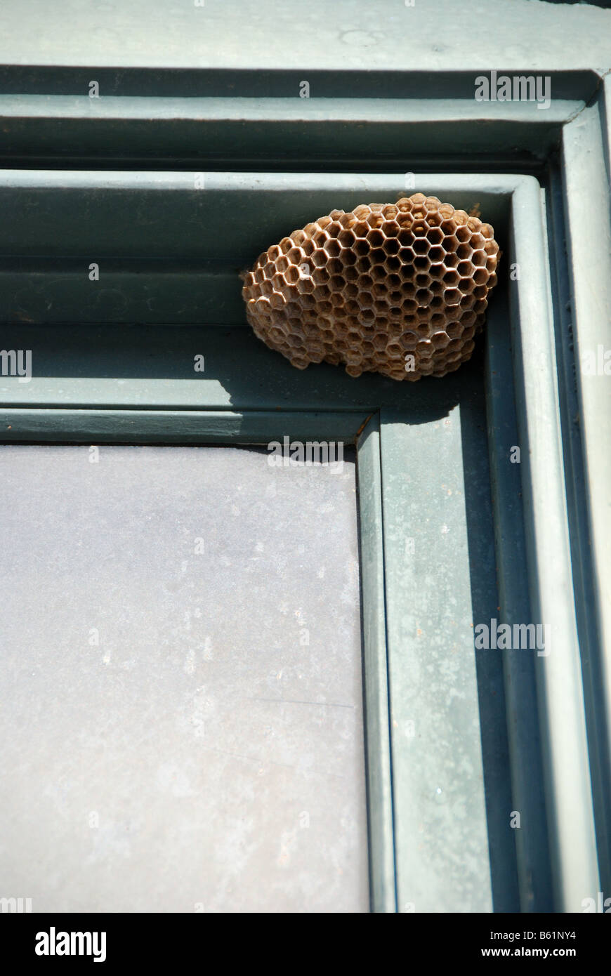 Combs Of A Wasp Nest Stock Photos & Combs Of A Wasp Nest Stock ...