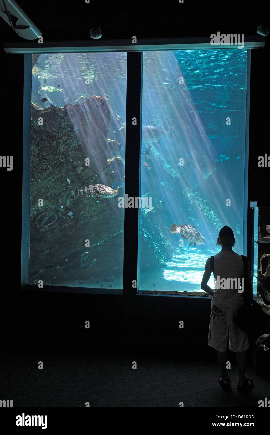 View in the largest coral reef aquarium in the world, HQ Reefworld, Townsville, Australia - Stock Image