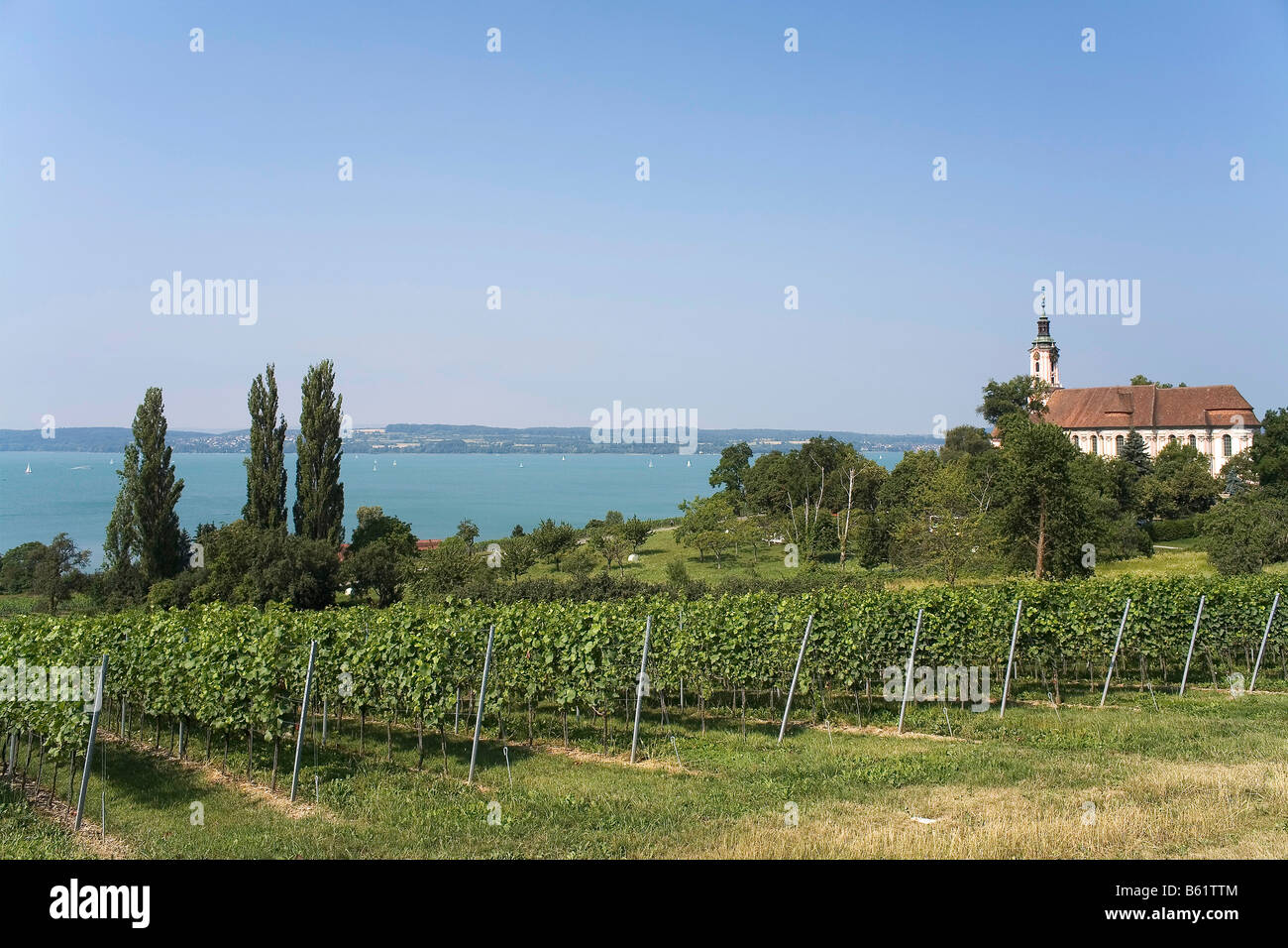 Summerly landscape with vineyards and the Pilgrimage Church Birnau on Bodensee, Lake Constance, Baden-Wuerttemberg, - Stock Image
