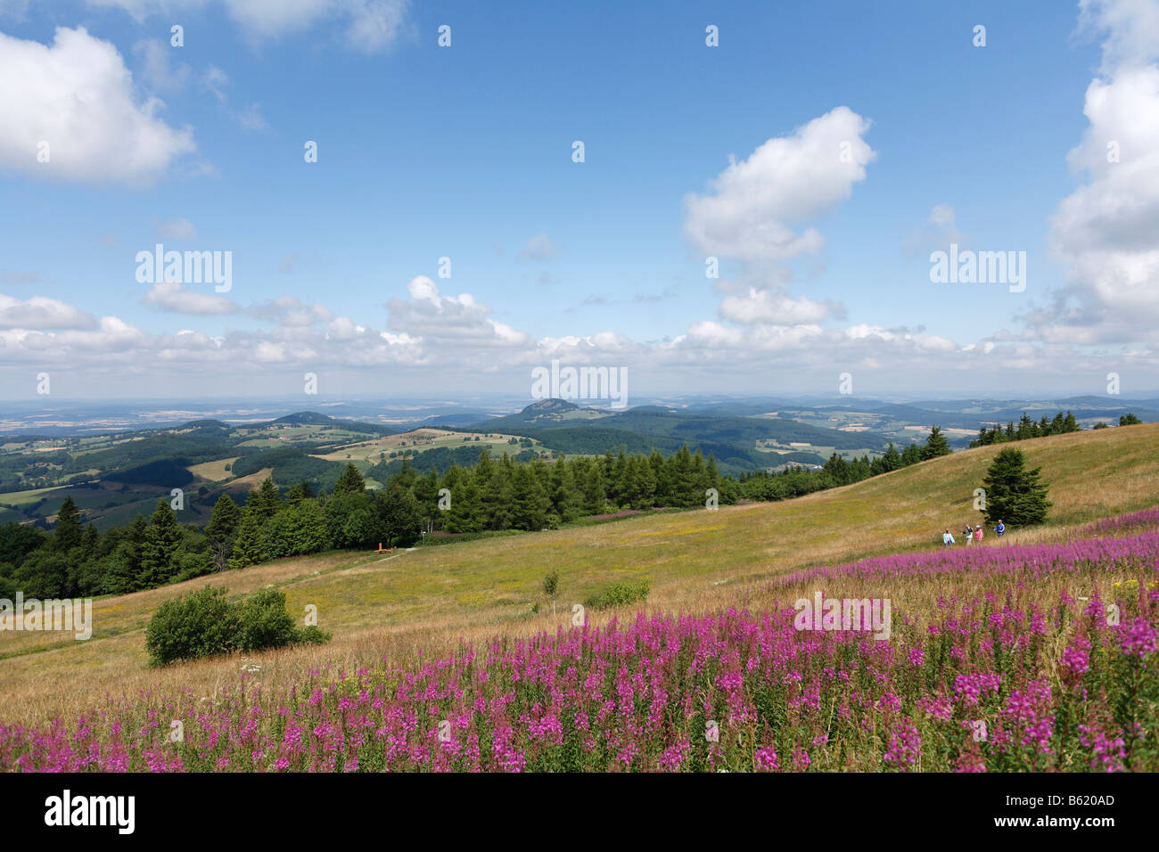 View from the Wasserkuppe plateau, lookin northwest, with the pink blossoms of Fireweed or Rosebay Willowherb (Epilobium Stock Photo