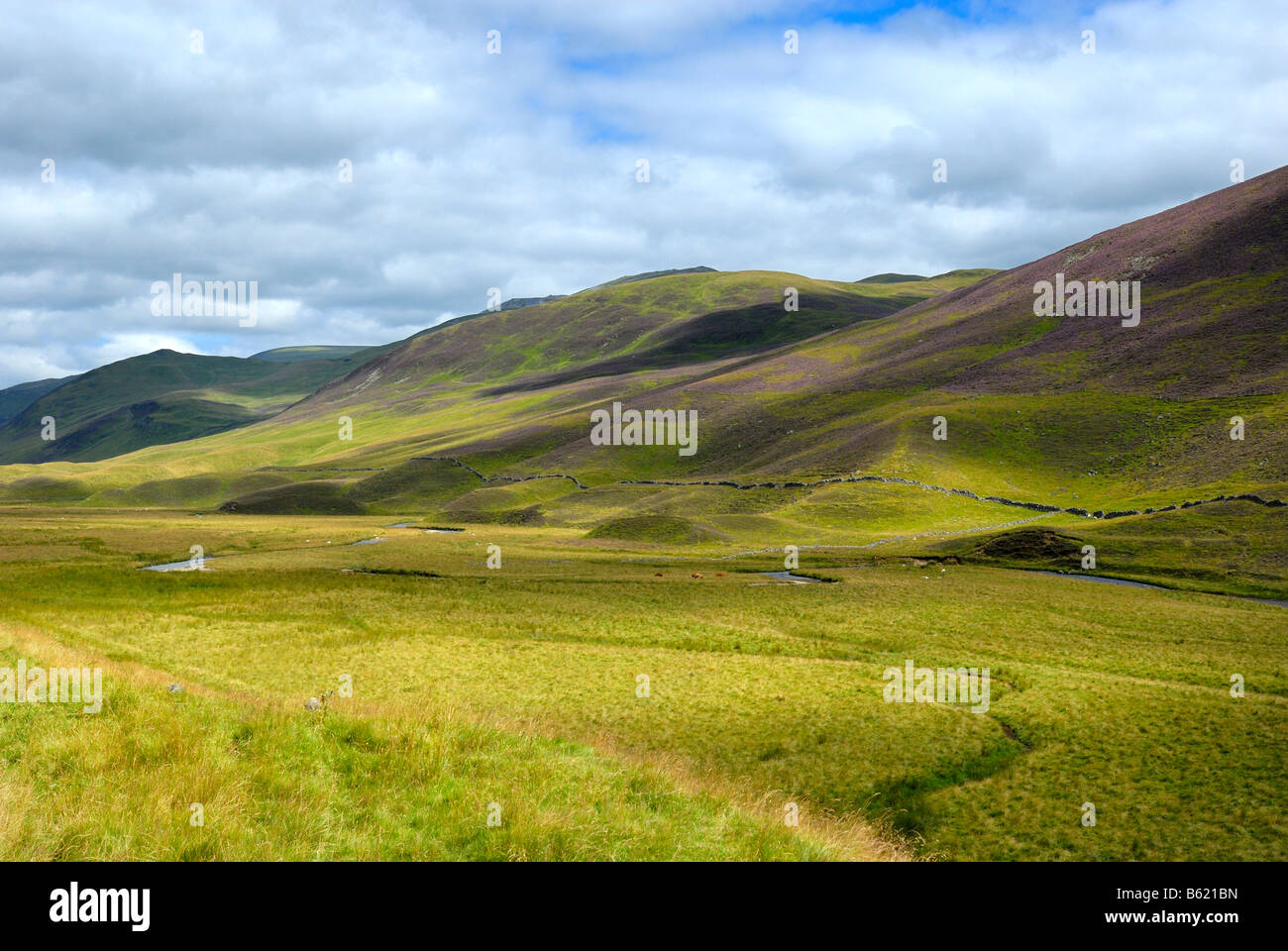 Grassy landscape of the Grampian Mountains, Scotland, Great Britain, Europe - Stock Image