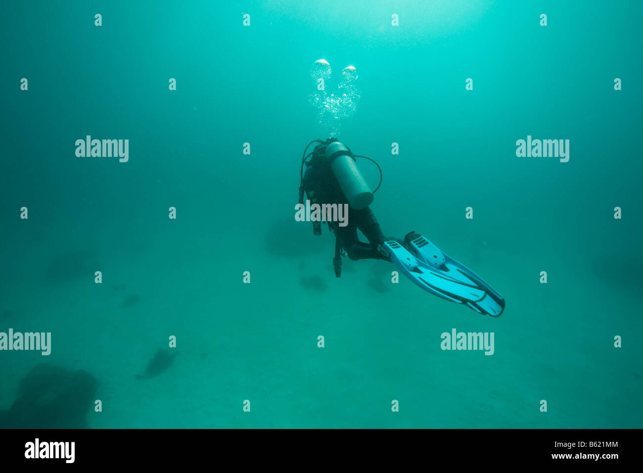 Scuba diver swimming in cloudy water, Philippines, Southeast Asia - Stock Image