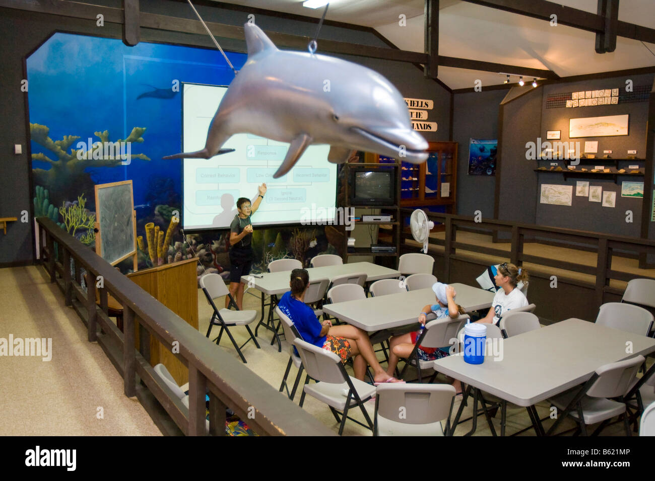 Pupils in the dolphin museum, lesson about dealing with sharks and dolphins in nature, Roatan, Honduras, Central - Stock Image