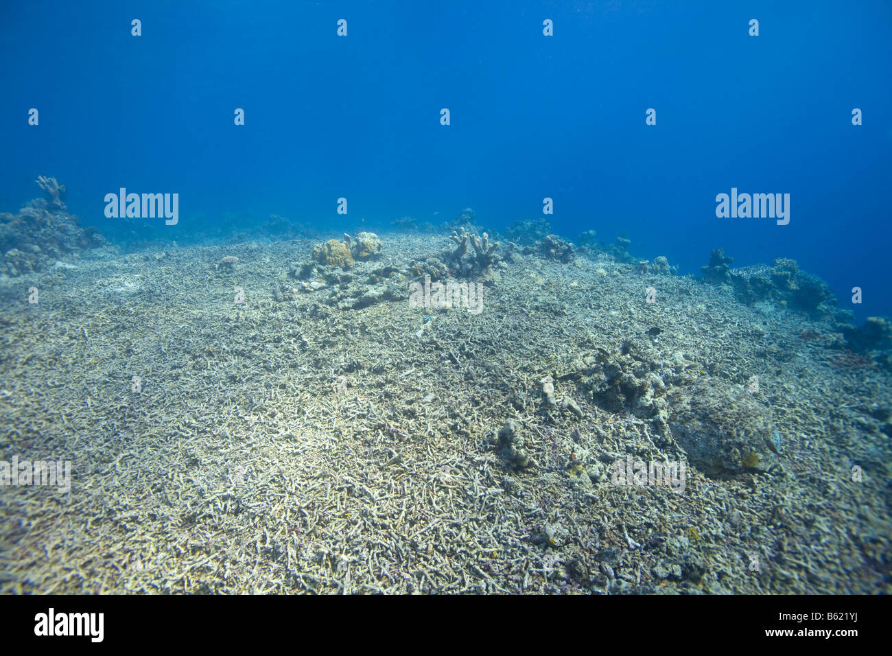 Coral reef destroyed by fishing with dynamite, Indonesia, South East Asia - Stock Image