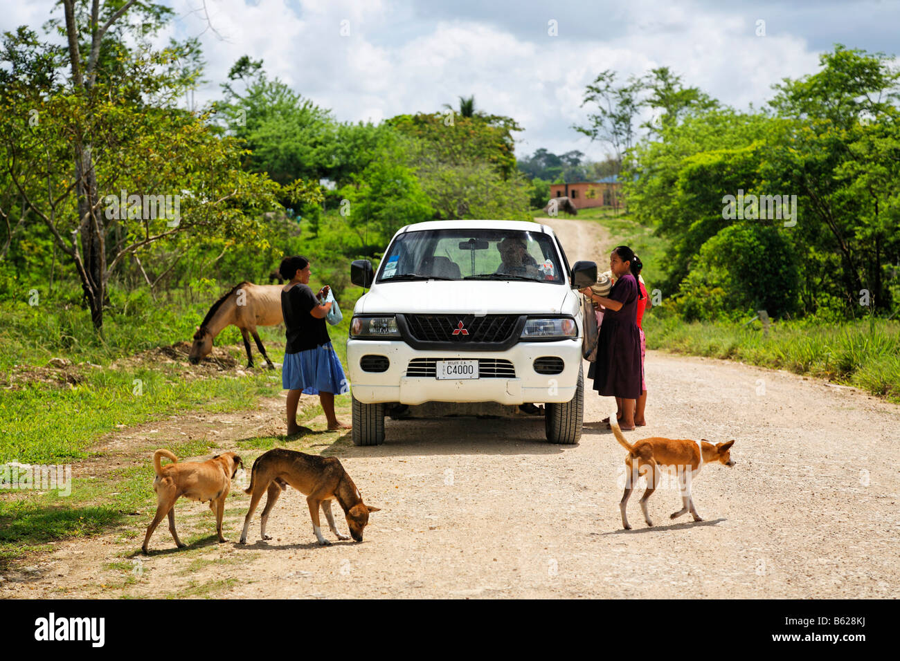 Local women selling souvenirs to tourists in a Mitsubishi car, dogs, horse, unmade road, Punta Gorda, Belize, Central - Stock Image