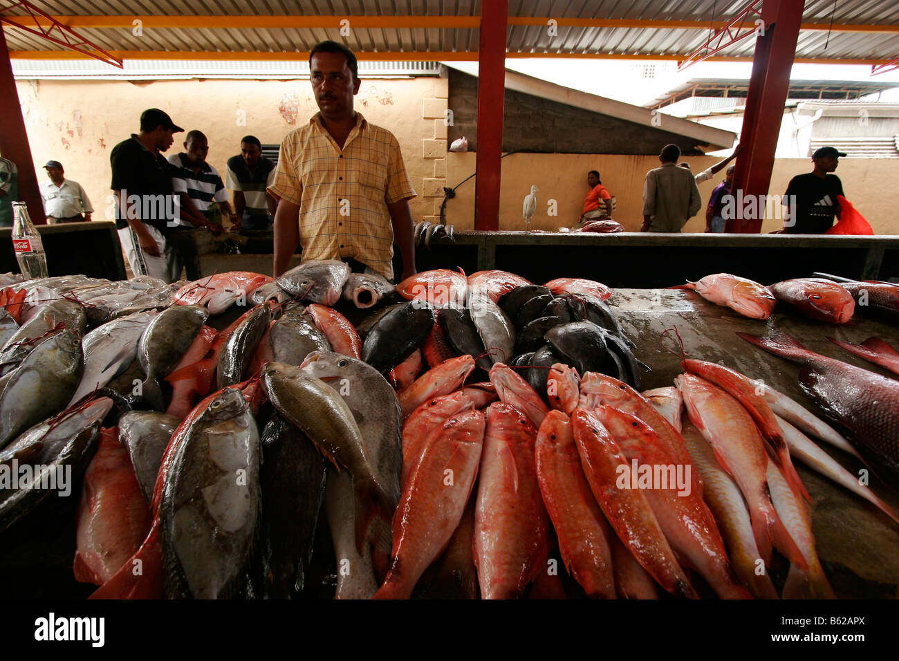 Dealer with freshly caught fish in the market of the island capital city of Victoria, Mahe Island, Seychelles, Africa - Stock Image