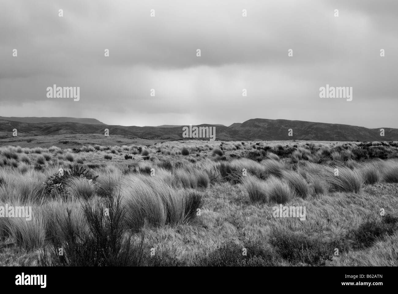 Rangipo Desert is a desert-like environment in New Zealand, located in the Ruapehu District on the North Island - Stock Image