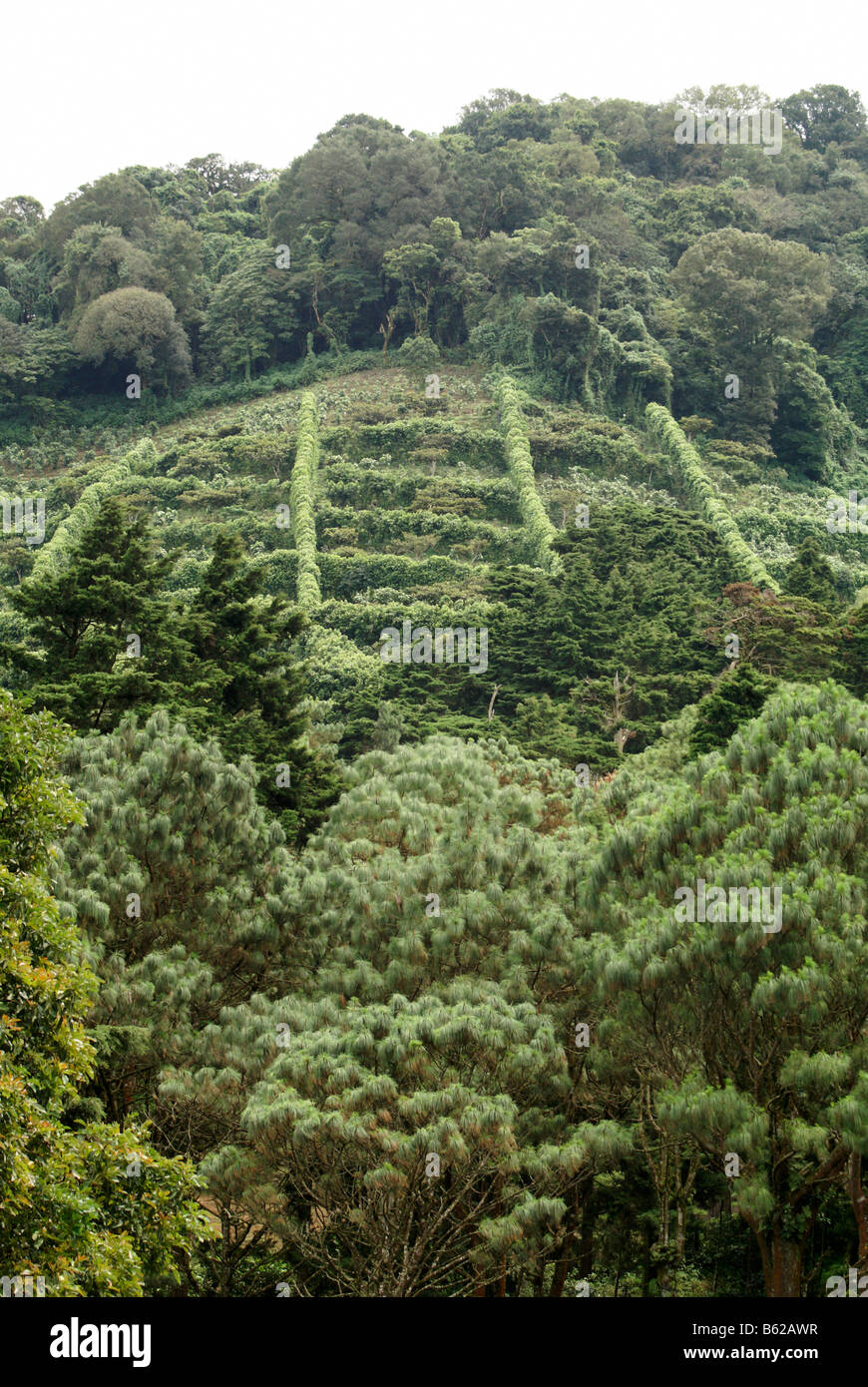 Coffee plantation or finca in the mountains of western El Salvador, Central America - Stock Image