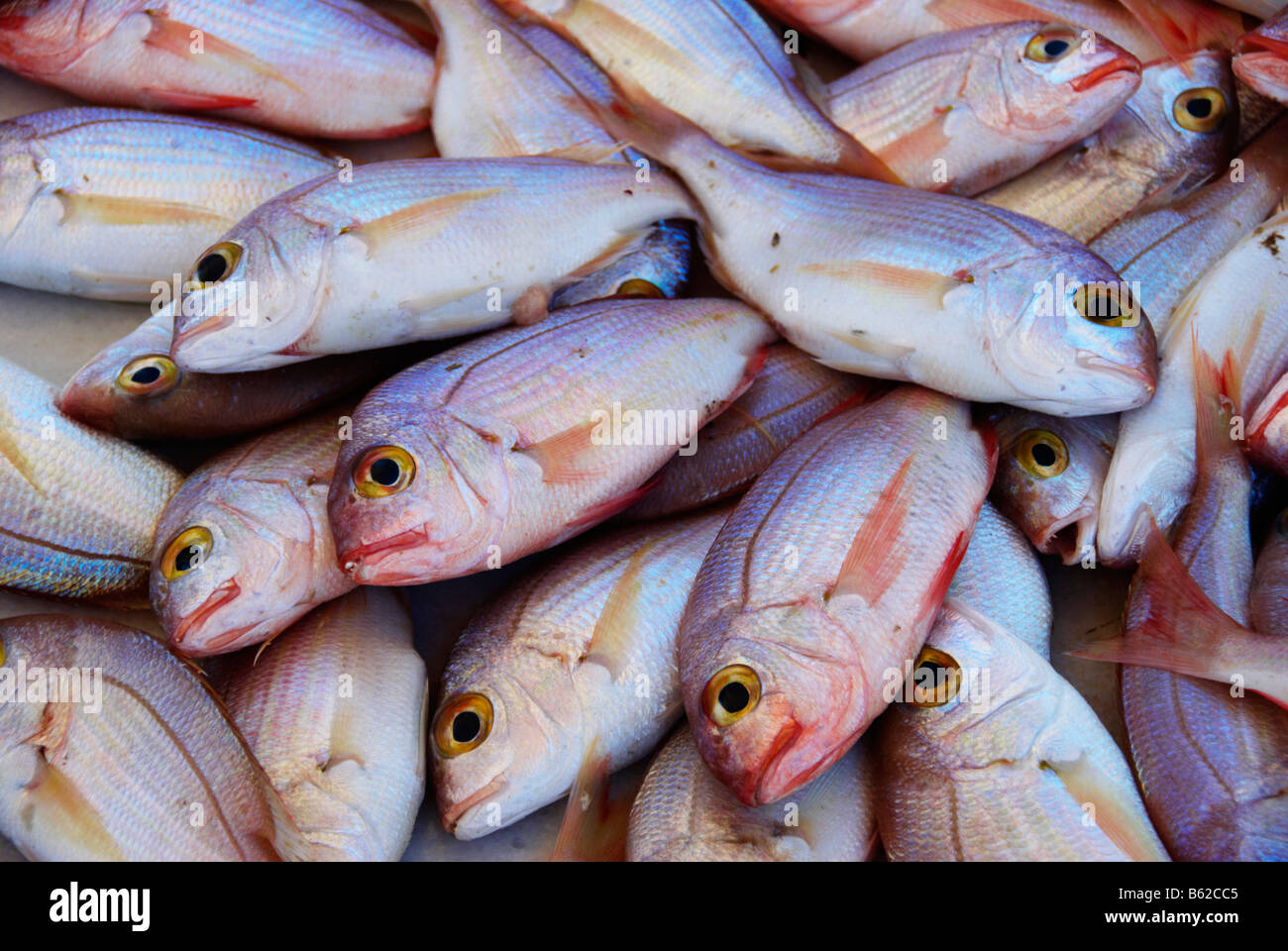 Fish at fish market, Rhodes Island, Greece, Europe - Stock Image
