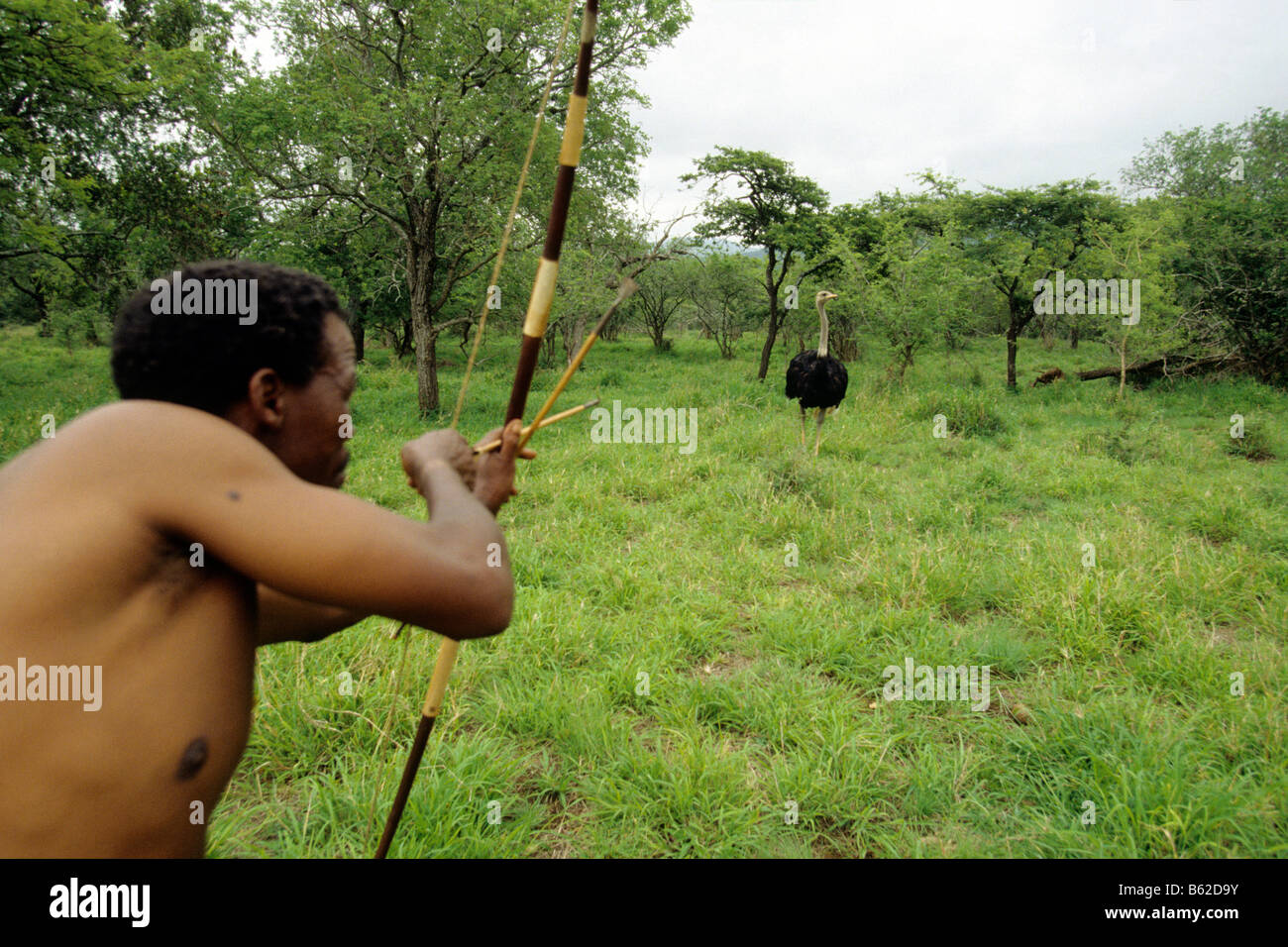 Bushman (San), man hunting ostrich with bow and arrow - Stock Image