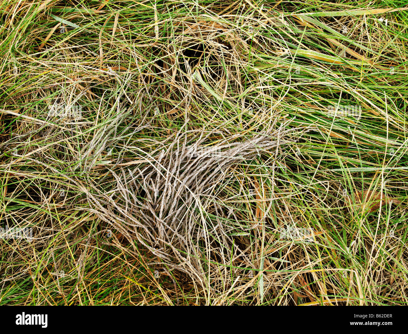 close up of wild plants creating an abstract pattern - Stock Image