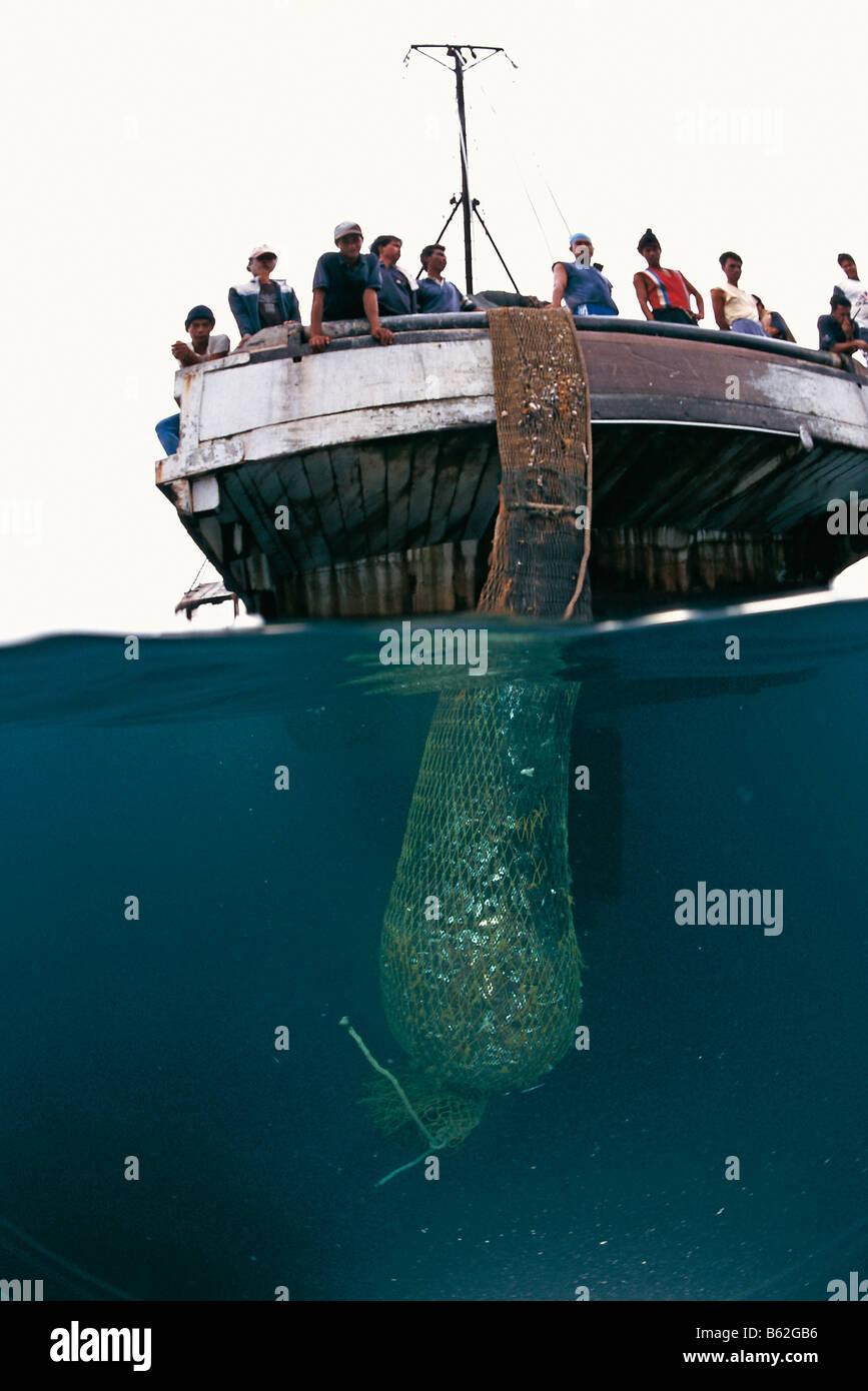 Trawler catch, split level - Stock Image