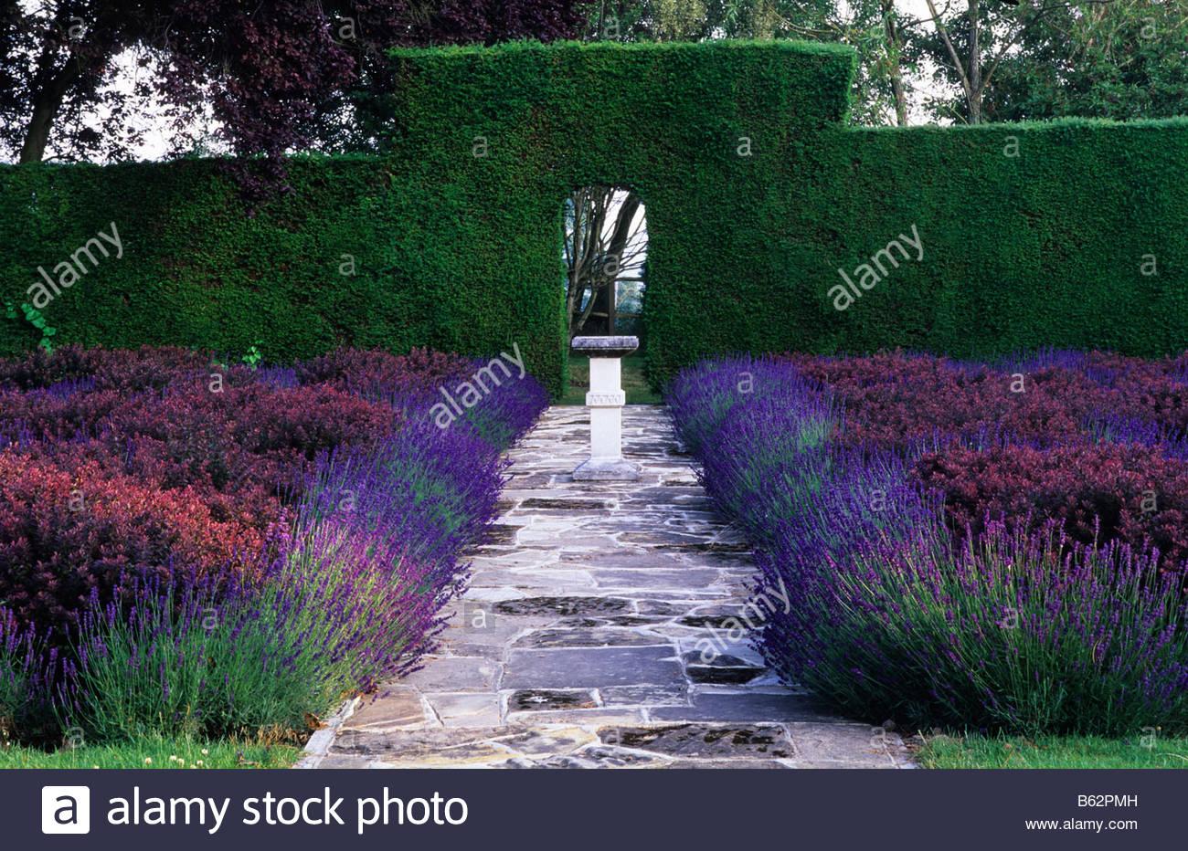 knot garden lavandula hidcote berberis thunbergii atropurpurea nana stock photo 20960033 alamy. Black Bedroom Furniture Sets. Home Design Ideas