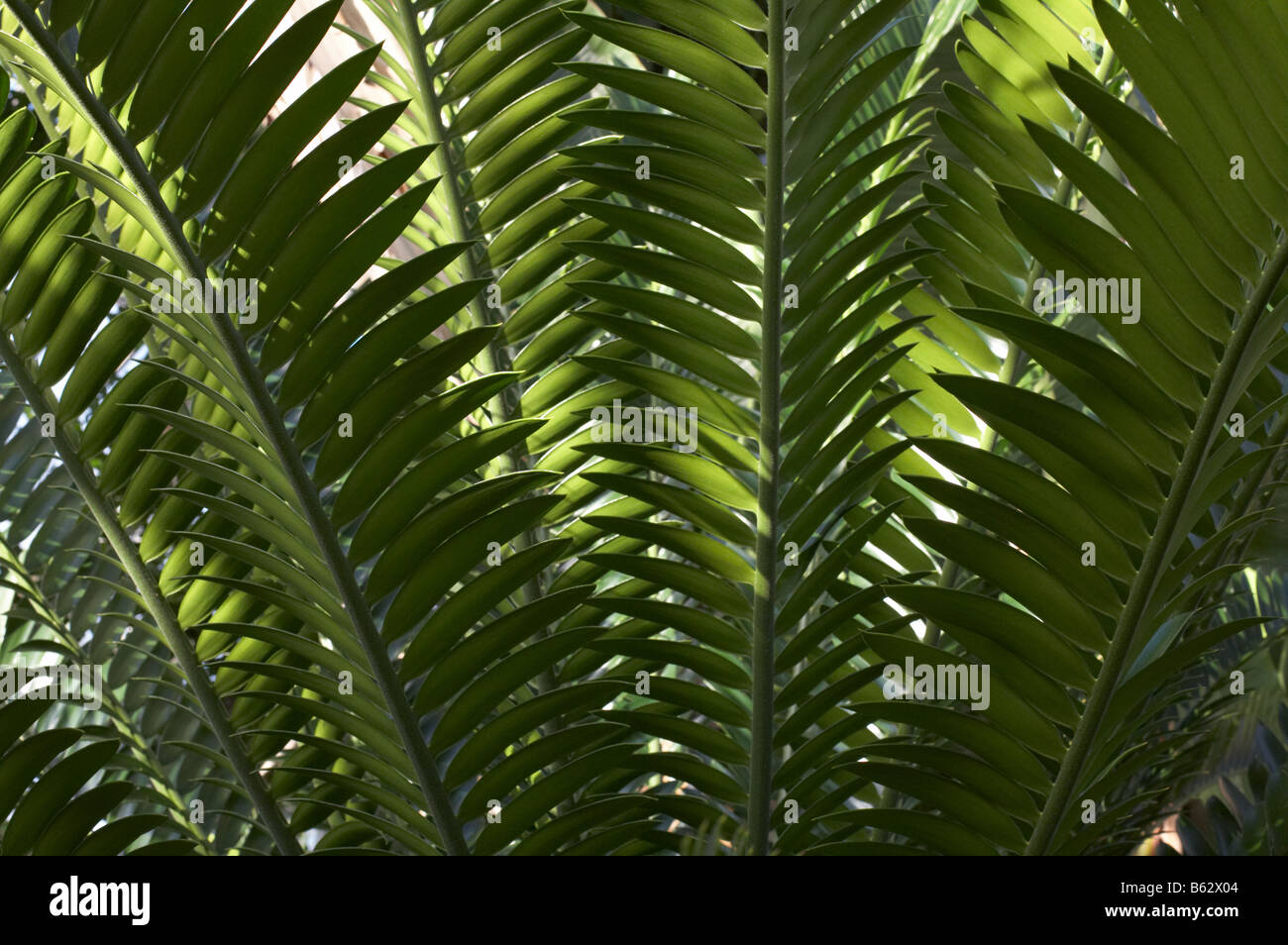 plants inside the Temperate House in Kew Gardens London England UK - Stock Image