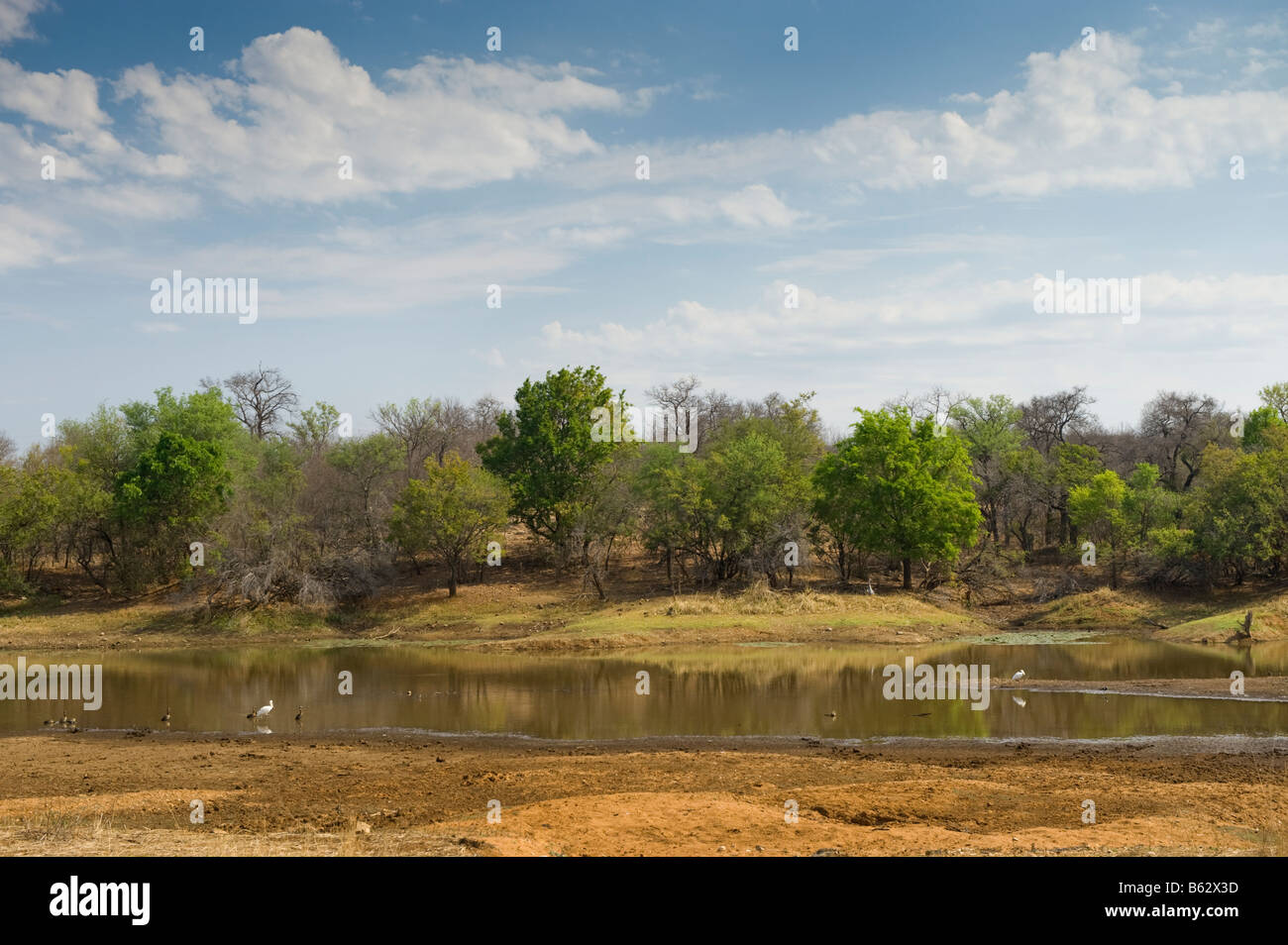 water hole water hole river riverbed bed wide view landscape south africa desert red dust dirt road drive way safari - Stock Image