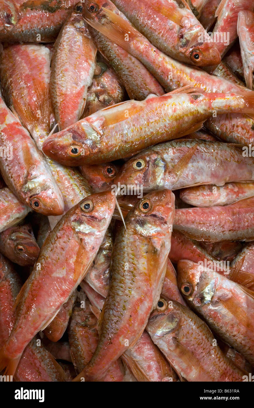 Holland Flevo Urk Fish auction Red mullet - Stock Image